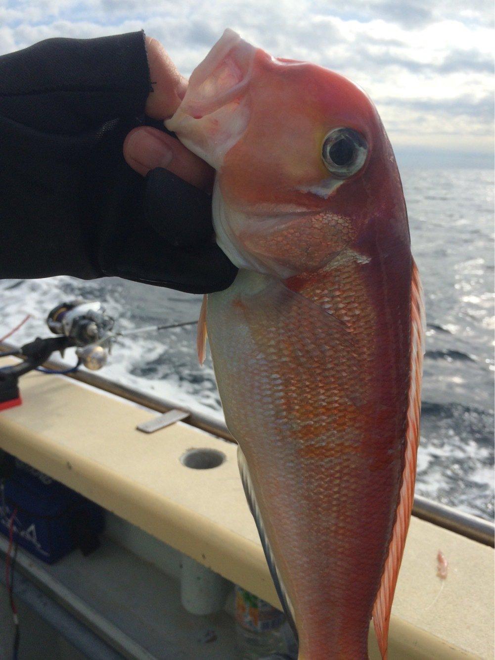 ケンジさんの投稿画像,写っている魚はアマダイ