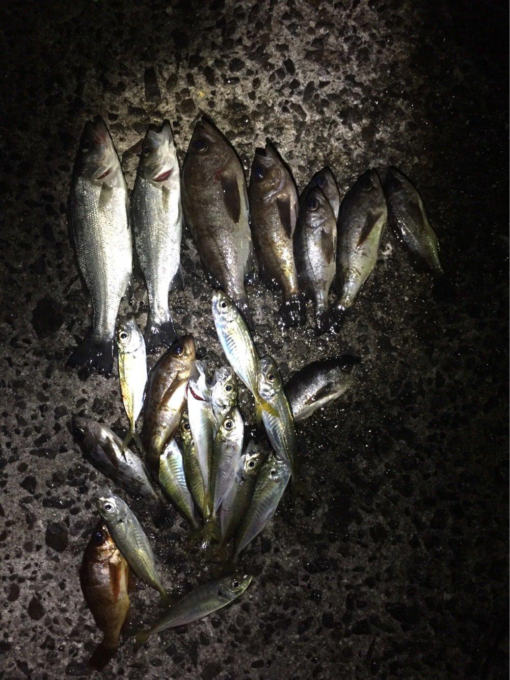 kさんの投稿画像,写っている魚は