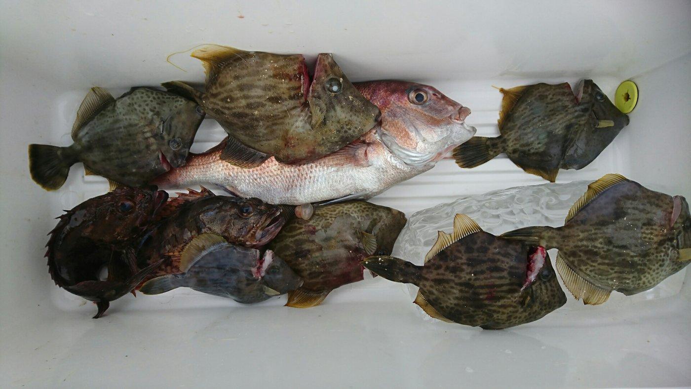 デコ8さんの投稿画像,写っている魚はカワハギ