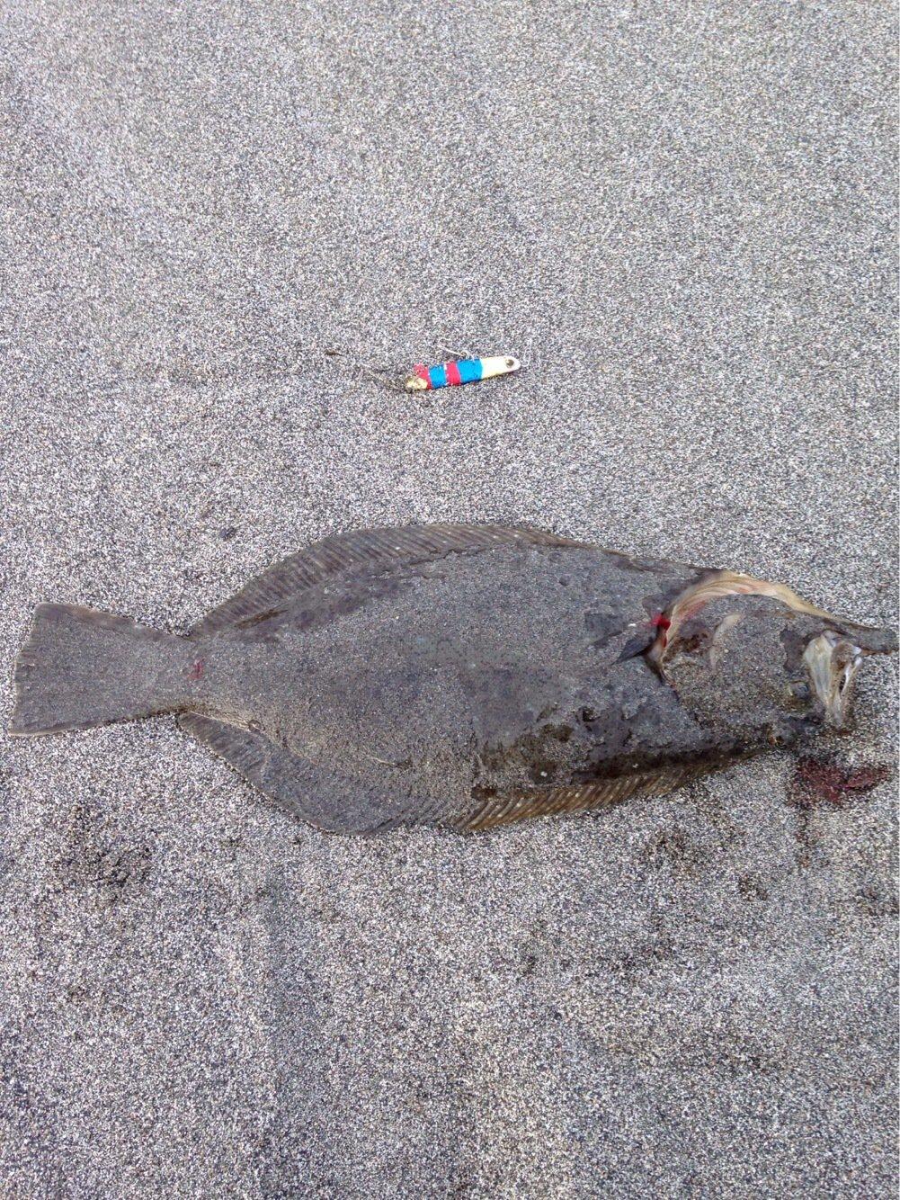 ショーちゃんさんの投稿画像,写っている魚は