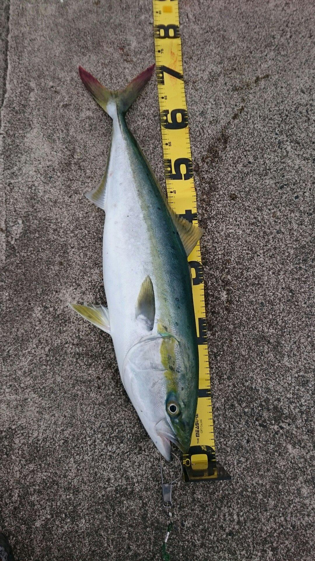 浩行さんの投稿画像,写っている魚はブリ