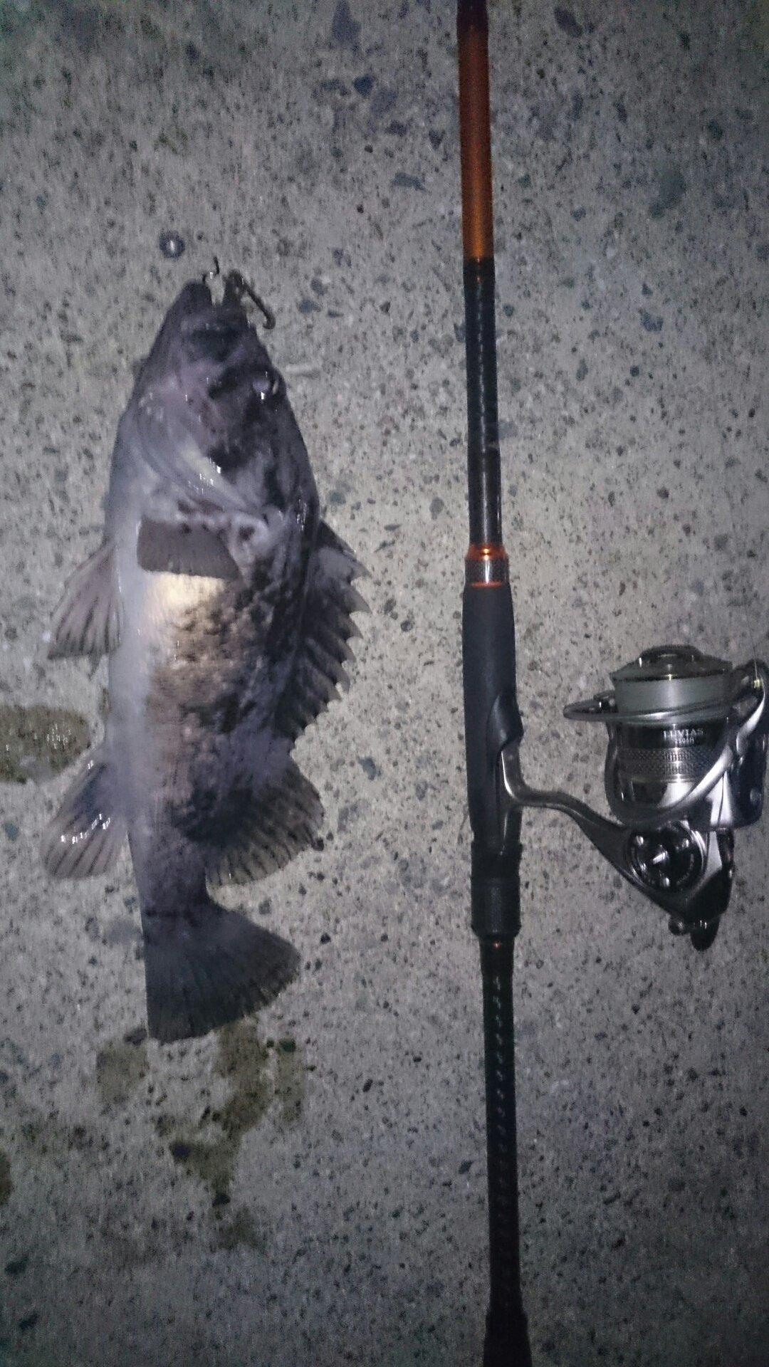 小物倶楽部 ももさんの投稿画像,写っている魚はクロソイ
