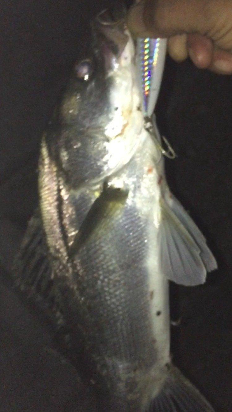 かず坊さんの投稿画像,写っている魚は