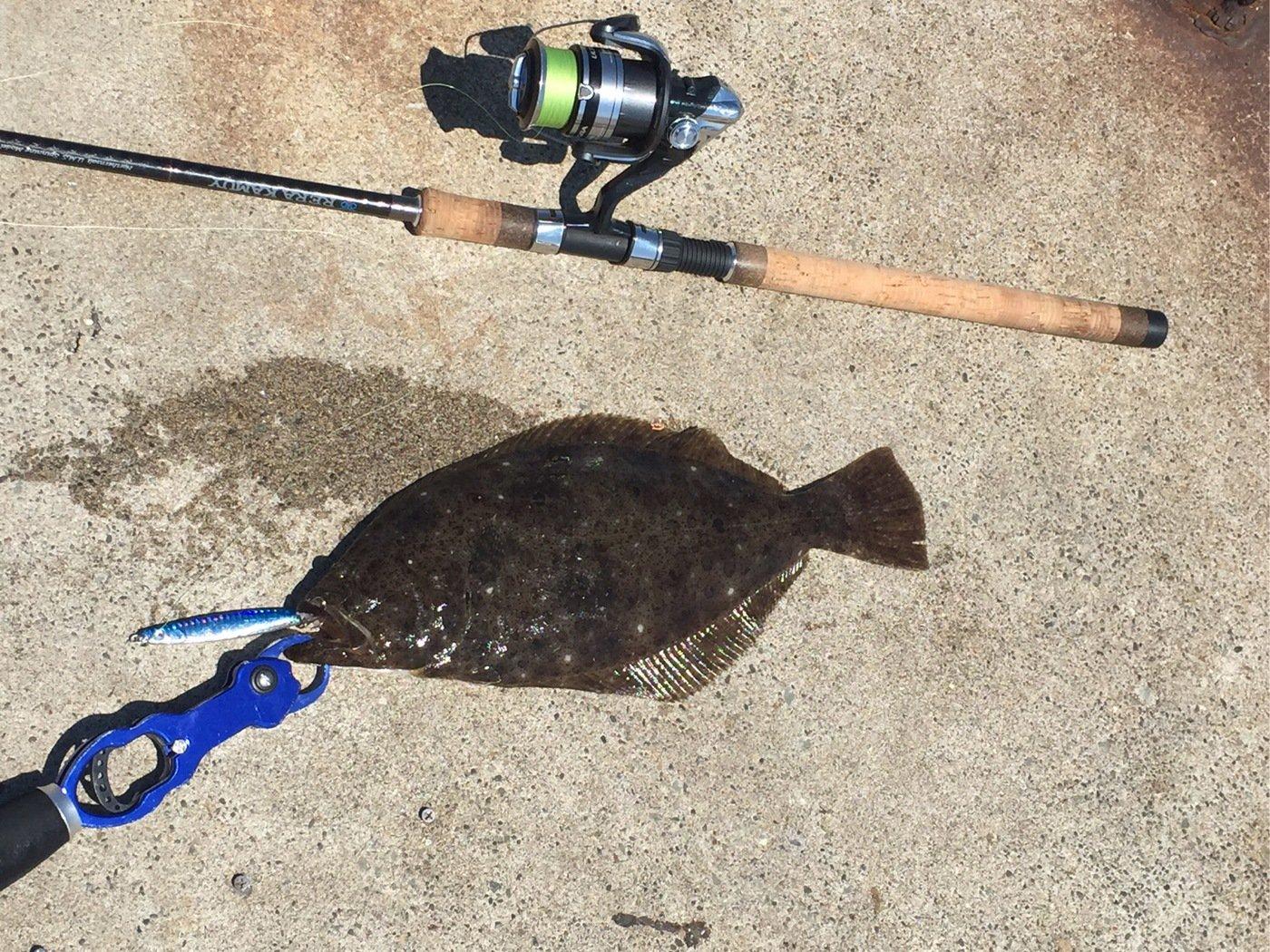 釣りバカさんの投稿画像,写っている魚はヒラメ