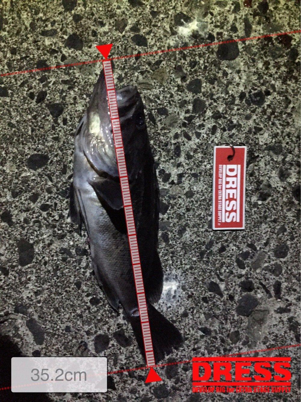 釣りバカさんの投稿画像,写っている魚はクロソイ
