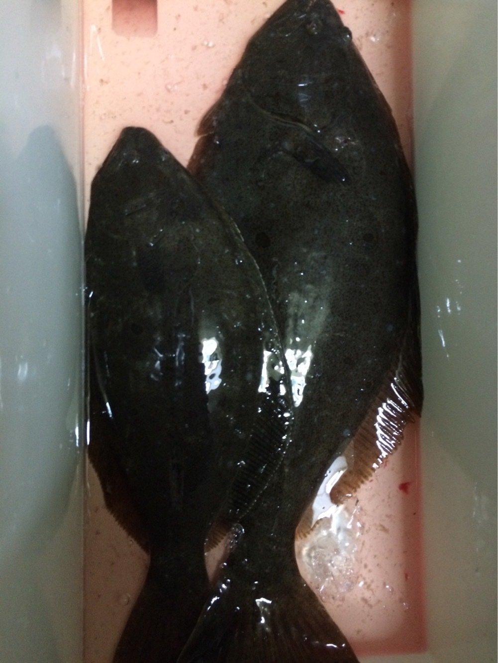 Johnnyさんの投稿画像,写っている魚はヒラメ