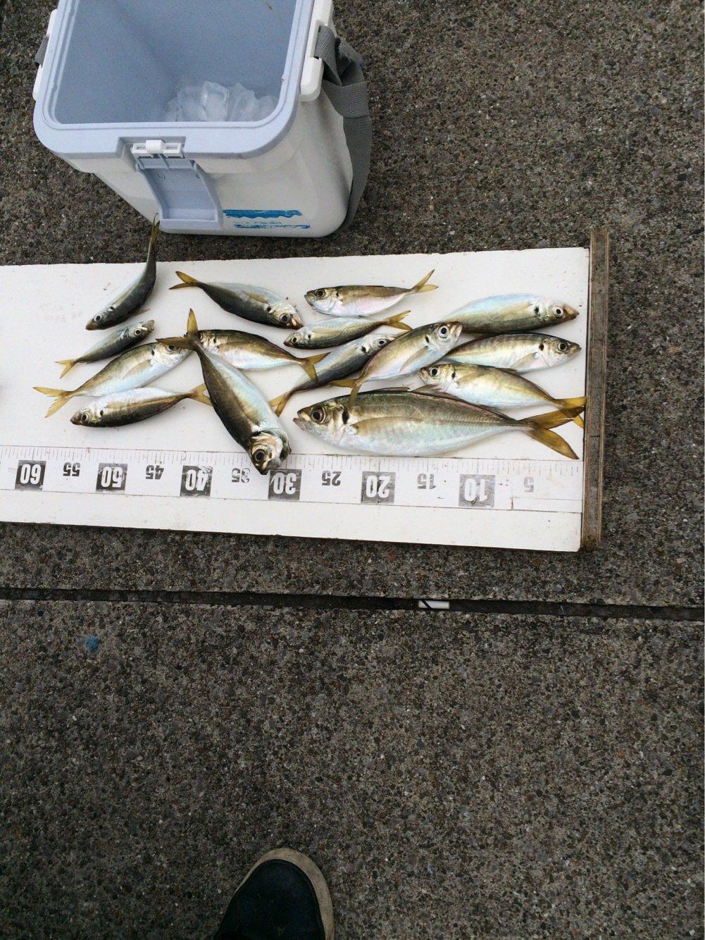 クリさんの投稿画像,写っている魚はアジ