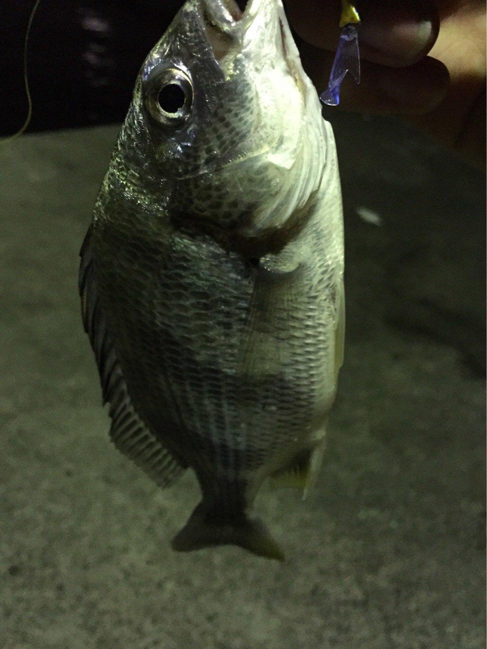 りくさんの投稿画像,写っている魚は