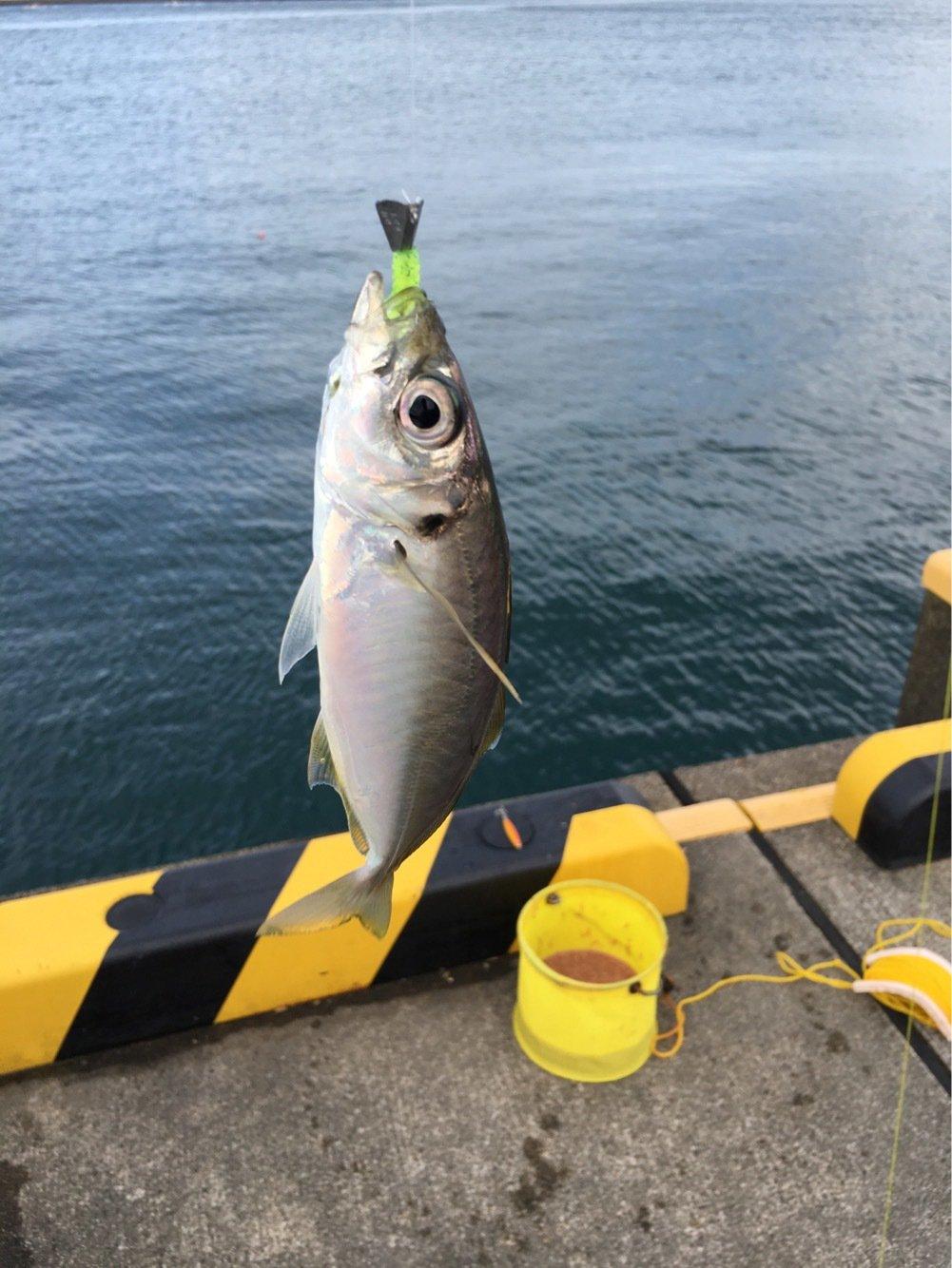 牙狼さんの投稿画像,写っている魚はアジ