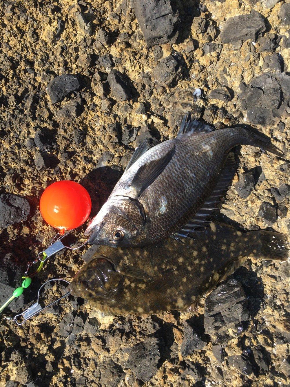 紋次郎さんの投稿画像,写っている魚はクロダイ