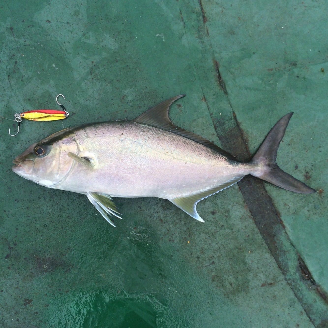 Kennyさんの投稿画像,写っている魚はカンパチ