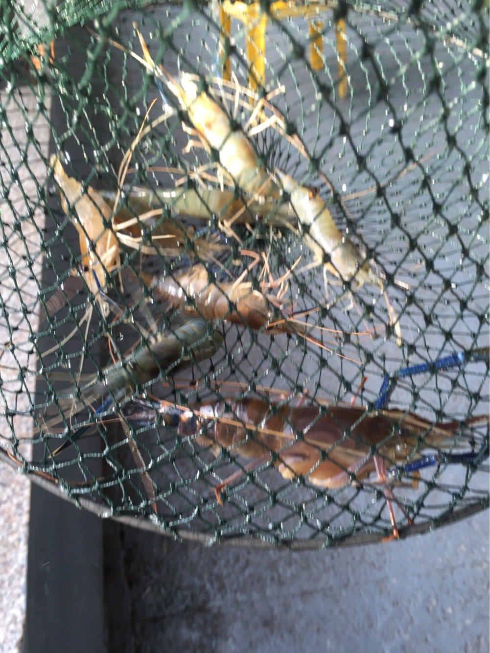 品川スズキさんの投稿画像,写っている魚は