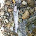 こうすけさんの石川県能美市での釣果写真
