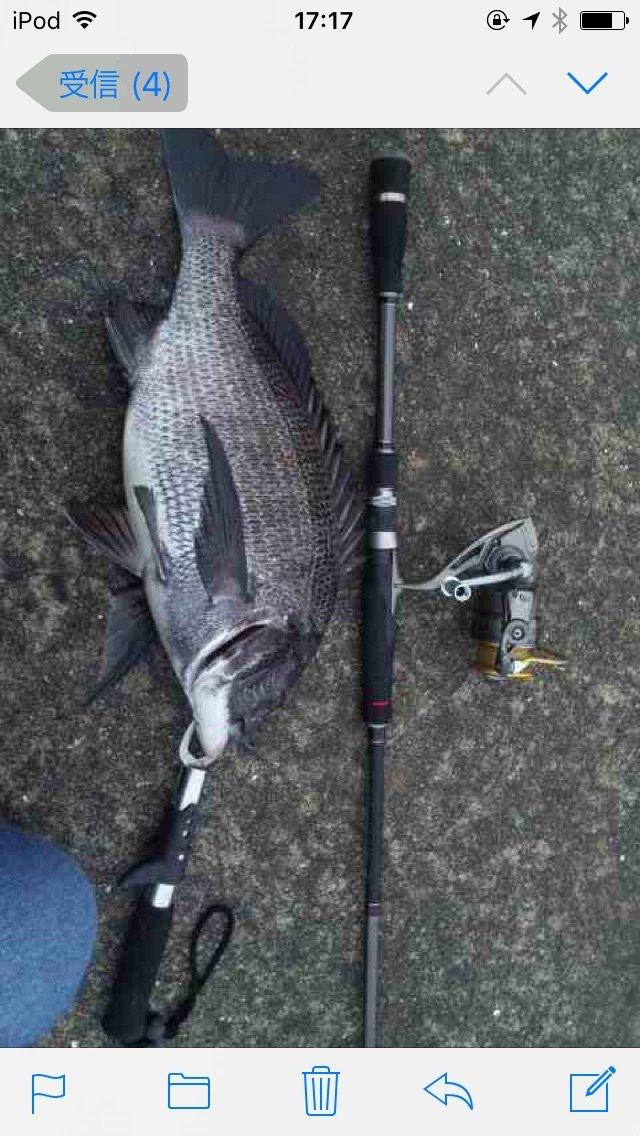 yuuya さんの投稿画像,写っている魚はクロダイ