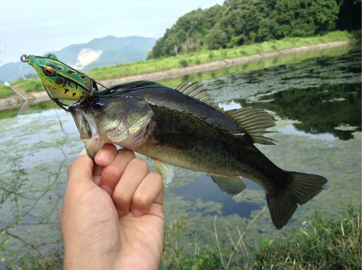 TAGUCHIさんの投稿画像,写っている魚はブラックバス