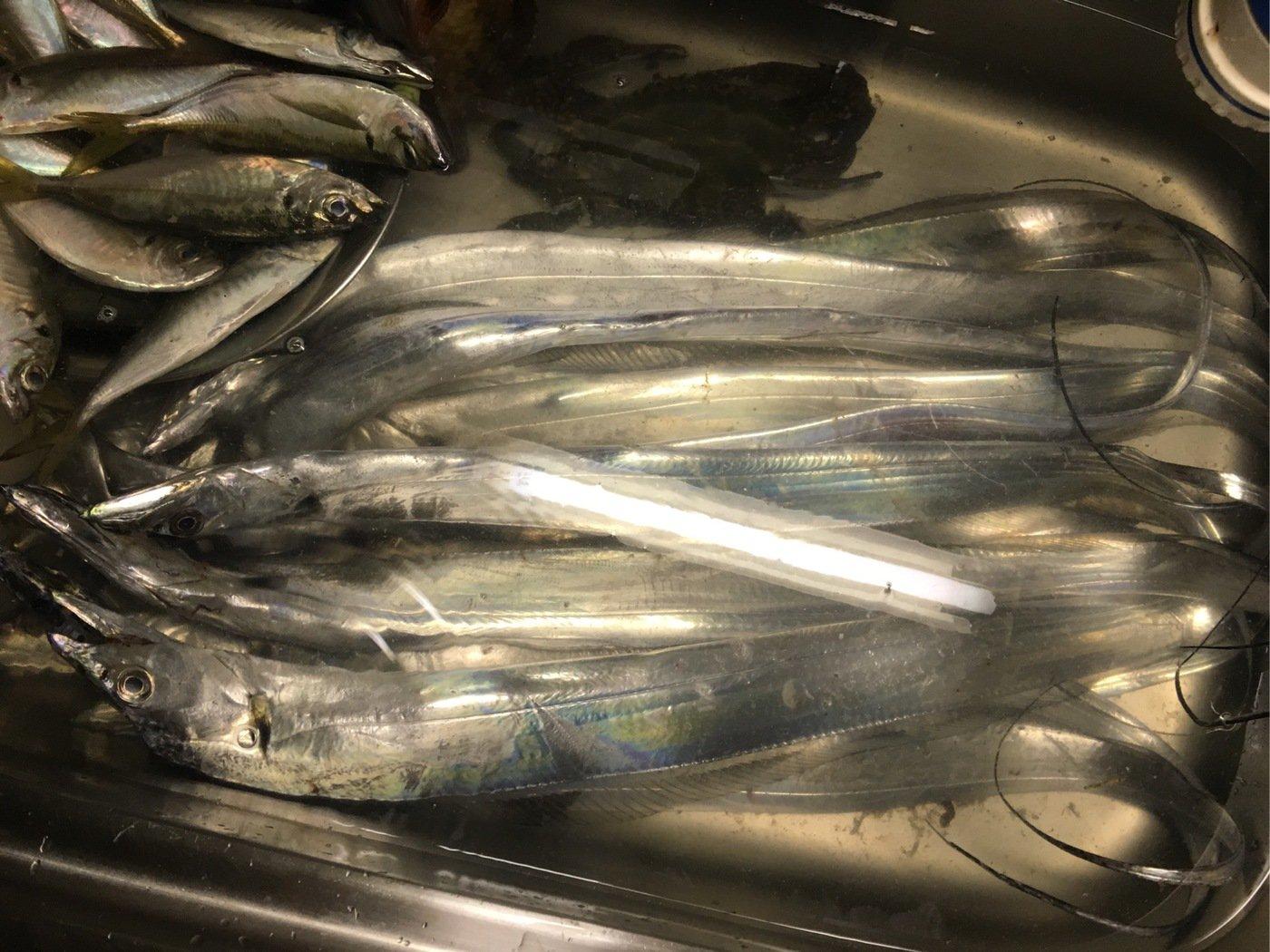 李さんの投稿画像,写っている魚は