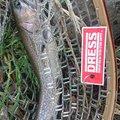 ボブさんの宮城県白石市での釣果写真