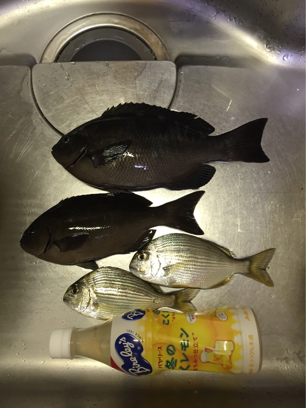 ぺいさんの投稿画像,写っている魚はメジナ