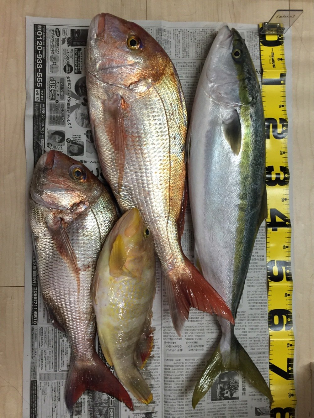 ミヤモトミチヒコさんの投稿画像,写っている魚はブリ