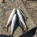 ワタナベさんの山形県東田川郡での釣果写真