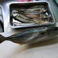 こうさんの長野県中野市での釣果写真