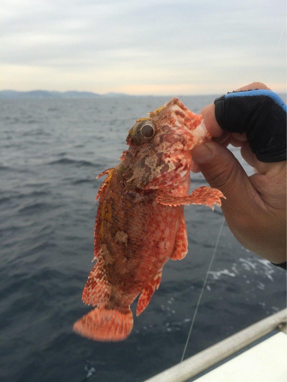 まるたさんの投稿画像,写っている魚はオニカサゴ