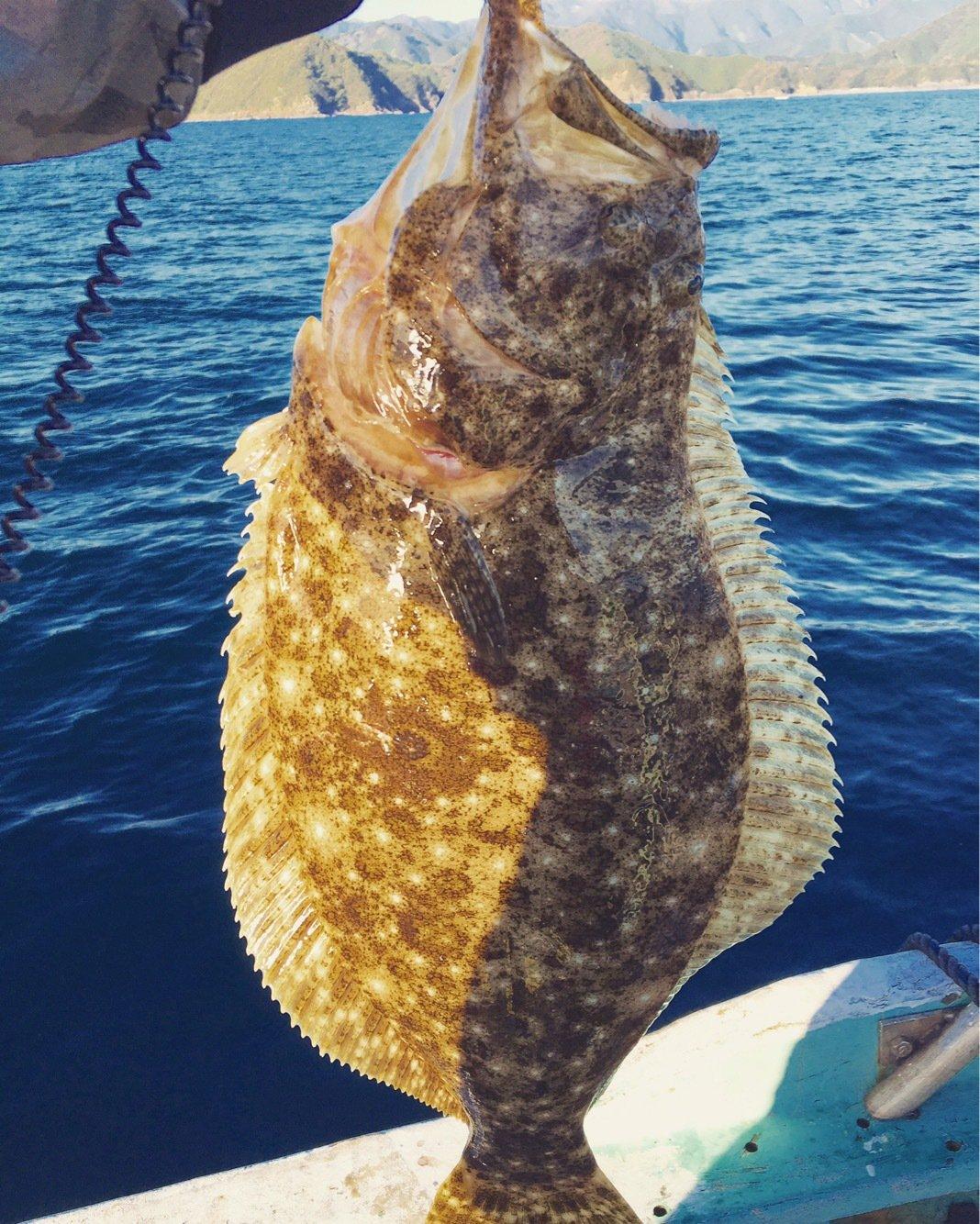 taka-piloさんの投稿画像,写っている魚はヒラメ