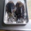 もんじ3さんの岡山県井原市での釣果写真