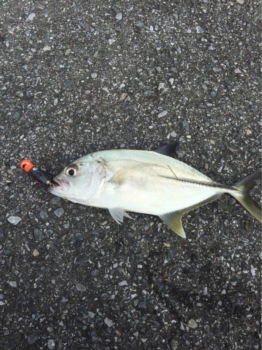 meg さんの投稿画像,写っている魚は