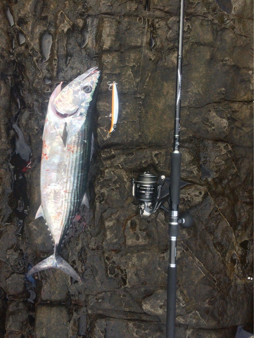 まーつさんの投稿画像,写っている魚はハガツオ