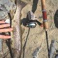 釣り人®️さんの岩手県気仙郡での釣果写真
