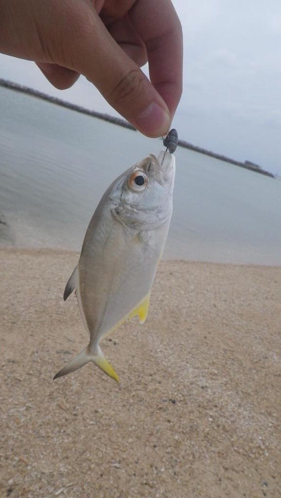 スズキリさんの投稿画像,写っている魚はギンガメアジ