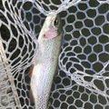 BJJさんの長野県南佐久郡での釣果写真