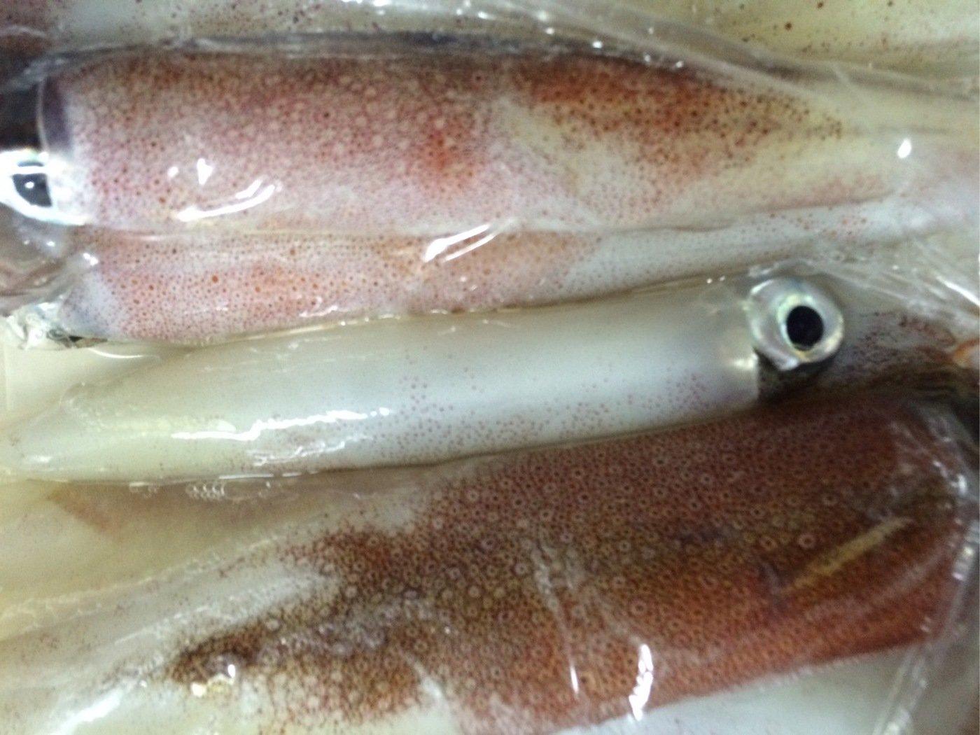 fish hunter 3号さんの投稿画像,写っている魚はヤリイカ