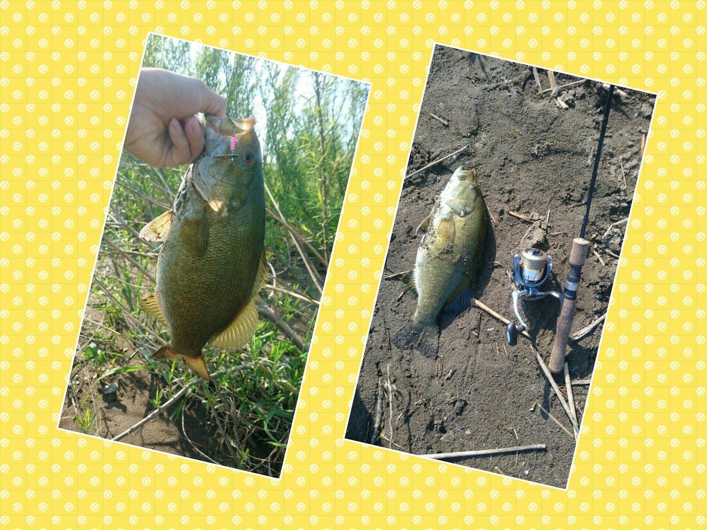 ヒロユキさんの投稿画像,写っている魚はスモールマウスバス
