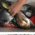 しょうとさんの奈良県生駒郡での釣果写真