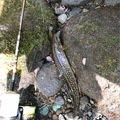 きっくさんの秋田県鹿角郡での釣果写真
