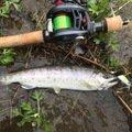 ハナネオさんの新潟県南魚沼郡での釣果写真