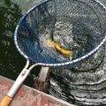 ビギさんの岐阜県各務原市での釣果写真