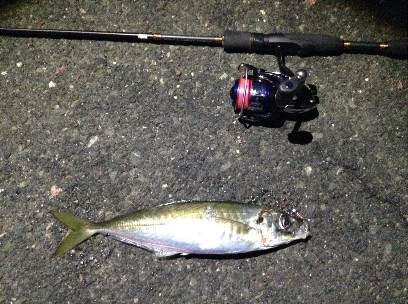 TAGUCHIさんの投稿画像,写っている魚はアジ