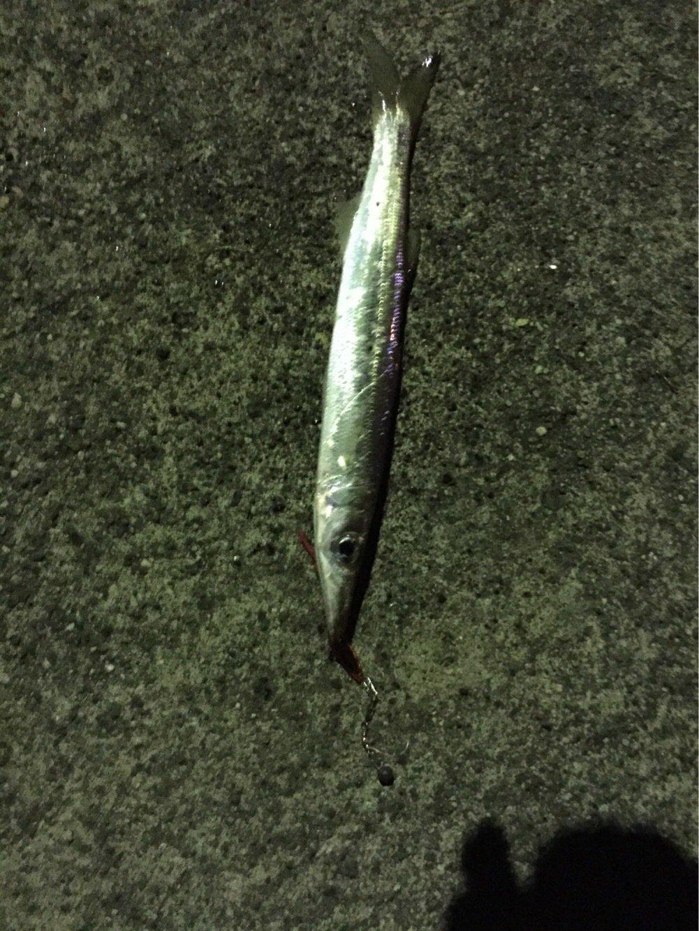 メバルさんの投稿画像,写っている魚は
