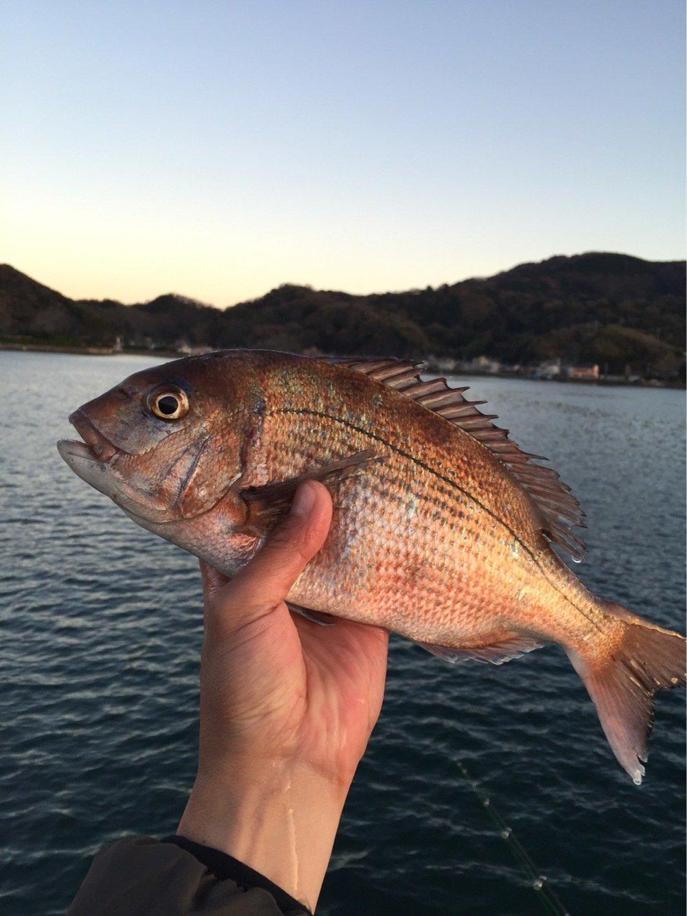 Koujiさんの投稿画像,写っている魚はマダイ