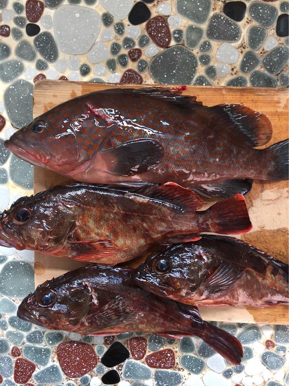 ヨッシー Kさんの投稿画像,写っている魚はキジハタ