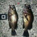 まつさんの兵庫県加西市での釣果写真