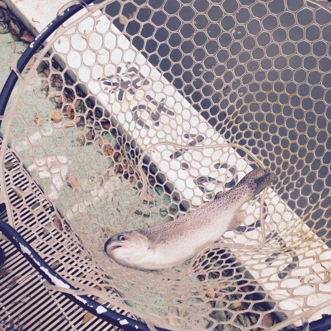 きむさんの投稿画像,写っている魚はニジマス