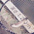 きむさんの東京都豊島区での釣果写真