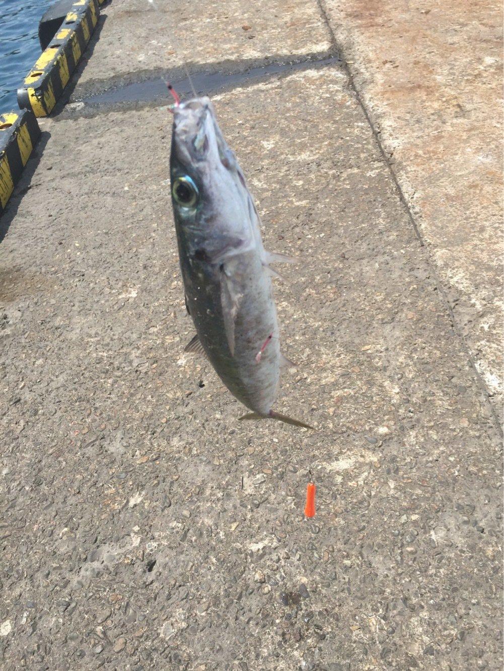 エスカさんの投稿画像,写っている魚はムロアジ