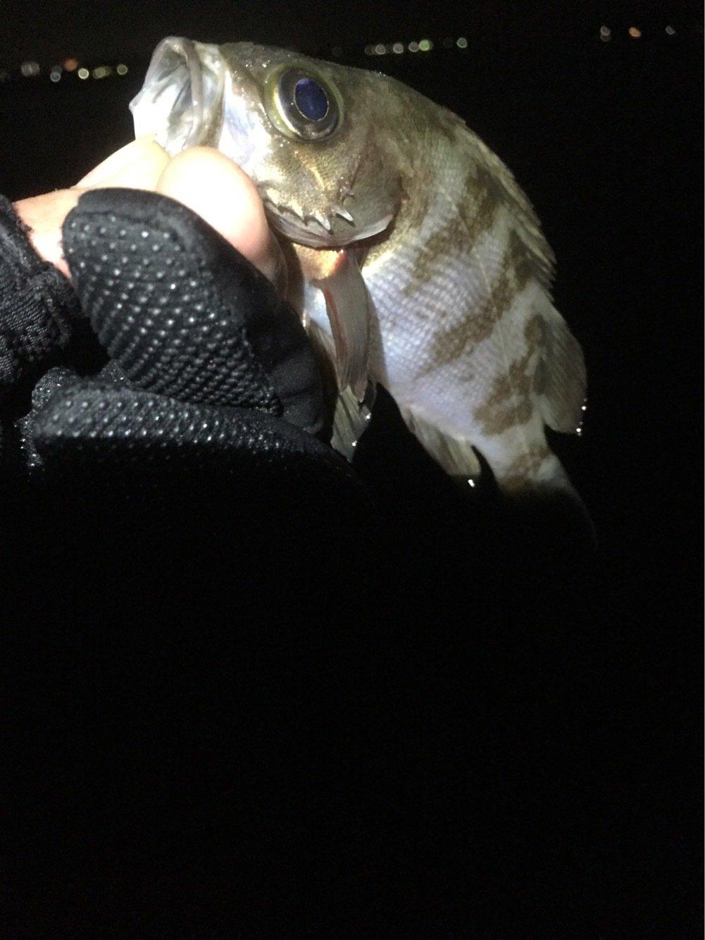 ひろんさんの投稿画像,写っている魚はメバル