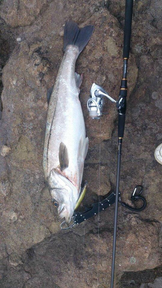 Nさんの投稿画像,写っている魚はスズキ