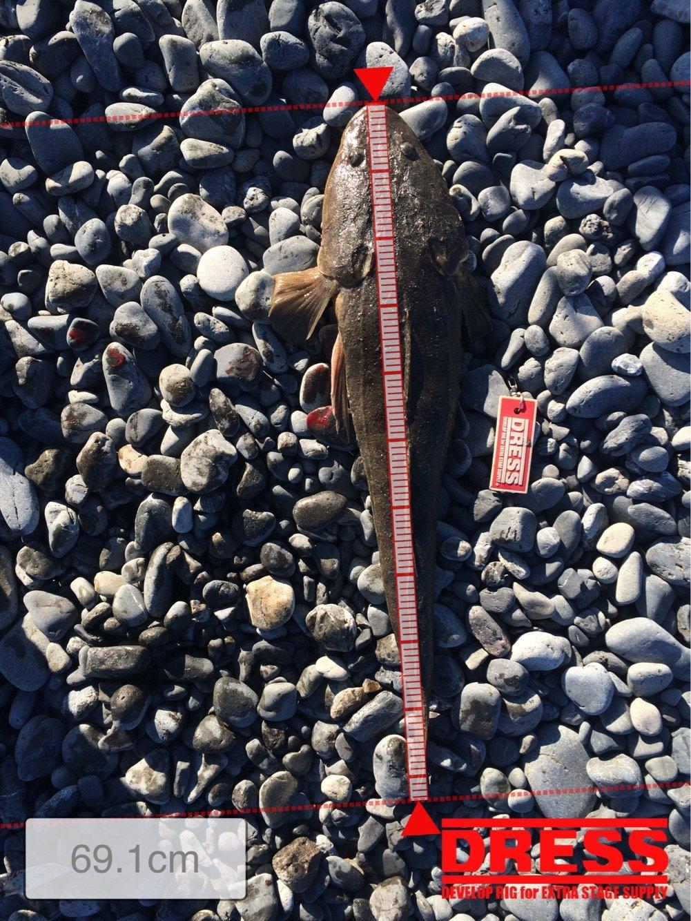 おけら大将さんの投稿画像,写っている魚はヒラメ